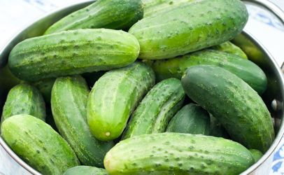 cucumber singles & personals Watch cucumber dating free porn cucumber dating videos an download it.