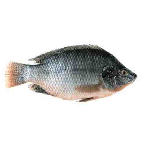 Tilapia fish medium 1kg online grocery store in kolkata for Is tilapia a healthy fish